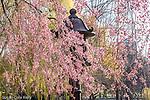 The Japanese Lantern in Boston Public Garden, Boston, MA, USA