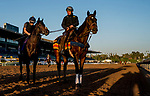 October 30, 2019: Scenes from preparations for the Breeders' Cup Championship weekend at Santa Anita Park in Arcadia, California on October 30, 2019. Scott Serio/Eclipse Sportswire/Breeders' Cup/CSM
