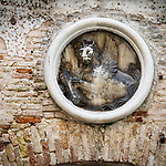 Round frame with winged lion frieze, Venice, Italy