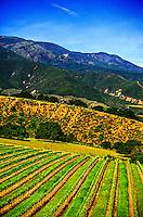 Paraiso Vineyards, Monterey County, California USA