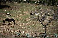 San Juan Tepeuxila, Cuicatlán, Oax. 25/08/2015.- A poco más de 3 horas de la capital de Oaxaca, se encuentra el municipio de San Juan Tepeuxila, catalogado en su ultimo informe por el Consejo Nacional de Evaluación de la Política de Desarrollo Social (CONEVAL), como la localidad más pobre del país, y es que los habitantes viven prácticamente al dia.<br /> <br /> El municipio se divide en 3 agencias municipales: San Juan Teponaxtla, San Pedro Cuyaltepec, y San Sebastián Tlacolula, así como por una la Agencia de Policía, San Andrés Pápalo, la cual es la más marginada de toda la zona, ya que con poco menos de 500 habitantes, no cuenta con la mayoría de servicios básicos.<br /> <br /> A decir de Manuel Villegas, Sindico Municipal de San Juan Tepeuxila, a pesar que han podido sacar adelante a la comunidad a base de solidaridad comunitaria, ya que los apoyos federales y estatales son casi nulos, aun tienen muchas carencias, puntualizando que simplemente la energía eléctrica no llega, ya que se va por temporadas debido al pésimo servicio por parte de la Comisión Federal de Electricidad (CFE).<br /> <br /> <br /> Así mismo, comento que respecto al sector educativo, hay un gran rezago enorme, ya que hacen falta maestros, lo anterior, luego de que decidieran sacar de la cabecera municipal a la sección 22 del Sindicato Nacional de Trabajadores de la Educación (SNTE) por los continuos paros de labores y la falta de compromiso, acto que los llevo a requerir los servicios de la sección 59, la cual los ha apoyado, sin embargo ante la renuencia por  parte del gobierno estatal por dar un sueldo digno, puntual y justo a los profesores, el personal académico ha tenido muchas veces que irse, así mismo, la falta de responsabilidad del IEEPO por entregar documentación a sus hijos, los ha dejado sin posibilidades de continuar con sus estudios.<br /> <br /> En tanto, a 1 hora 30 minutos de San Juan Tepeuxila, se encuentra San Andrés Pápalo, una de las comunidades que conforma este municipi