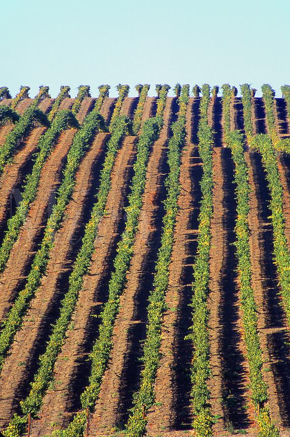 vineyard in Napa Valley, California