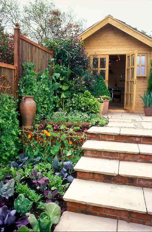 Vegetable and herb and flower garden with potting house shed, brick patio steps, fence, climbing peas vine, mixed crops, cabbages, edible landscaping, nasturtiums Tropaeoleum on trellis, mixed variety of edible landscaping