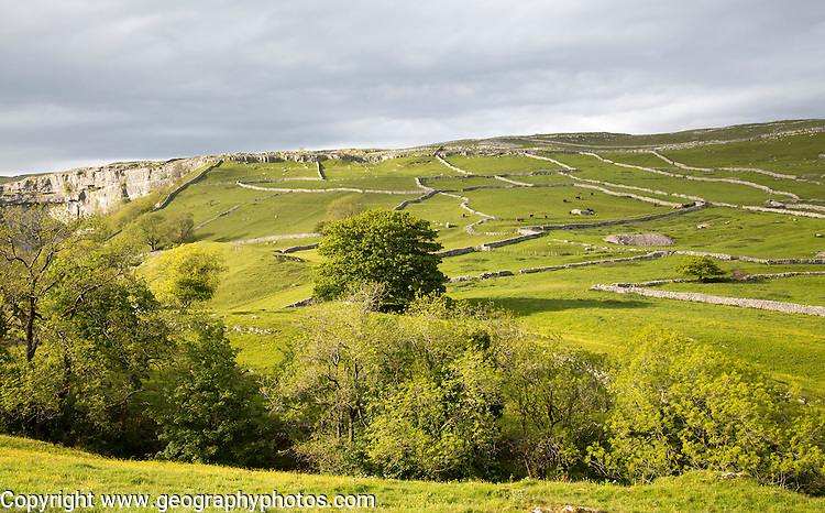 Fields and dry stonewalls, Malham, Yorkshire Dales national park, England, UK