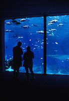 Two visitors view reef fish in large aquarium at Maui Ocean Center