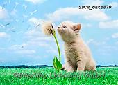 Xavier, ANIMALS, REALISTISCHE TIERE, ANIMALES REALISTICOS, cats, photos+++++,SPCHCATS870,#a#, EVERYDAY