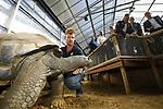 Foto: VidiPhoto<br /> <br /> RHENEN – De 31 Aldabra schildpadden van Ouwehands Dierenpark in Rhenen hebben een gloednieuw tropisch verblijf. Donderdag werd dat onder grote belangstelling geopend. Ouwehands heeft de grootste collectie reuzenschildpadden ter wereld.De Aldabra is de grootste landschildpad die er bestaat. Ze kunnen 170 kilo zwaar en 80 jaar oud worden. De oudste en bekendste schildpad van Ouwehands is Sjaak (41 jaar en ruim 100 kilo). Hij laat zich graag aaien door de verzorgers. In het verblijf is het constant 29 graden, met een hoge luchtvochtigheidsgraad. Aldabra schildpadden werden in de tijd van de VOC meegenomen als voedsel aan boord omdat ze bijna een jaar zonder voedsel en water kunnen. Foto:  Dierverzorger Erik knuffelt met Sjaak.<br /> Derde van links dierentuineigenaar Marcel Boekhoorn.