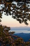 A lodgepole pine frames Lake Tahoe, Eldorado National Forest, California