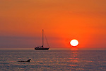 Sailboat and dolphin at sunset off Lido Key, Sarasota, FL.
