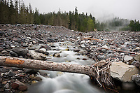 Rocky debris basin of Nisqually river flowing from glacier melt of Mount Rainier, Washington