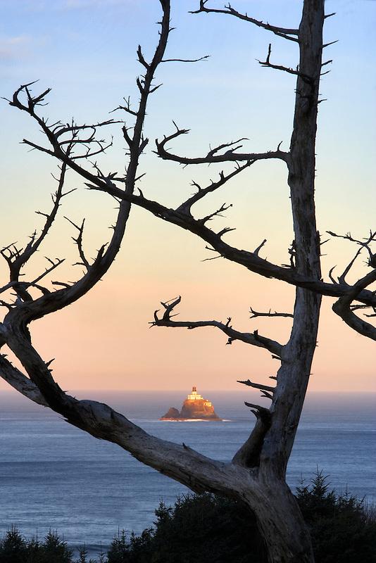 Tillamook Rock Lighthouse and dead tree. Oregon