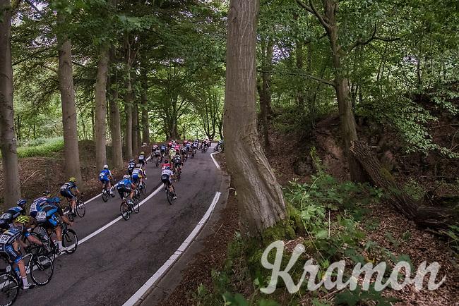 descending through the forest<br /> <br /> Ster ZLM Tour (2.1)<br /> Stage 4: Hotel Verviers &gt; La Gileppe (Jalhay)(190km)