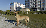 12/02/2014 - Stray Dog - Russkiy Dom Apartment hotel - Sochi - Russia