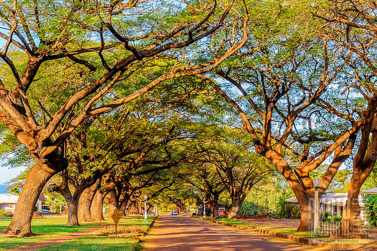 A private, tree-lined street of row houses leading to an old sugar cane mill on Kaua'i.