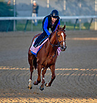 LOUISVILLE, KY - MAY 01: Rayya, trained by Bob Baffert, exercises in preparation for the Kentucky Oaks at Churchill Downs on May 1, 2018 in Louisville, Kentucky. (Photo by John Voorhees/Eclipse Sportswire/Getty Images)