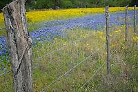 Wildflowers in Texas, Park Road 4, Burnet