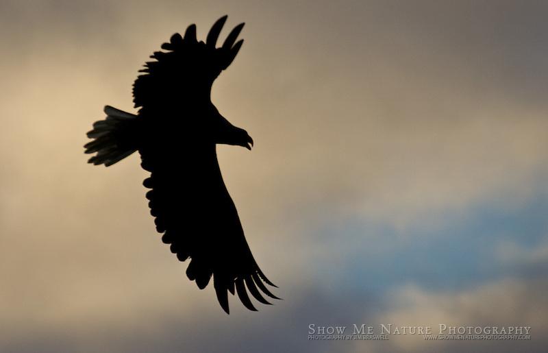 """Stately Silhouette"", Alaska"