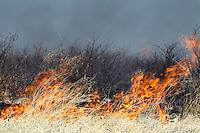 Raging bush fire