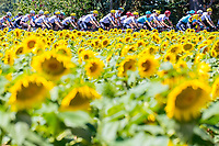 Picture by Alex Whitehead/SWpix.com - 15/07/2017 - Cycling - Le Tour de France - Stage 14, Blagnac to Rodez - Peloton in action.