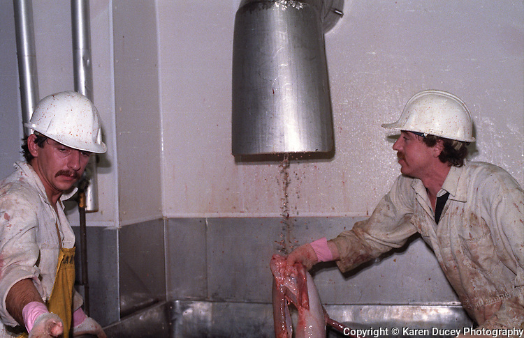 Photos taken inside Centennial Packers, a meat-packing plant in Calgary, Alberta, Canada in 1989