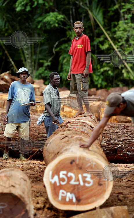 Workers, members of the Lobi community, in a logging camp. In the last ten years many foreign logging companies have moved into the Solomon Islands. The current level of official production of 830,000 cubic metres, mainly whole log exports, is running at nearly three times the sustainable level. With more than 60% of government revenue coming from tariffs on log exports, the country's economy seems locked into a spiral of resource depletion and unsustainable development.