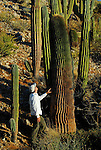 man and giant barrel cacti, Santa Catalina Island, Gulf of California