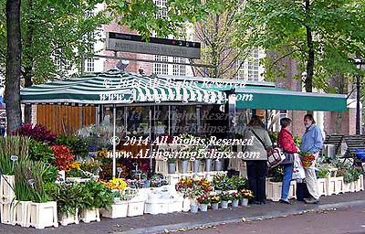 Amsterdam Street Scene Flower Vendor