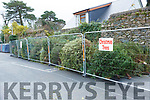 Killarney Town Christmas Tree Collection