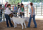 Judge Celina Phillips talks with Savannah Morrison, left, and Leticia Orozco during livestock competition at the NV150 Fair at Fuji Park, in Carson City, Nev., on Friday, Aug. 1, 2014.<br /> Photo by Cathleen Allison