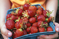 Strawberries. Basket of strawberries.