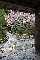 Cherry blossom in full bloom glimpsed through the entrance gate to the gardens at Hosen-in Temple, Ohara, near Kyoto
