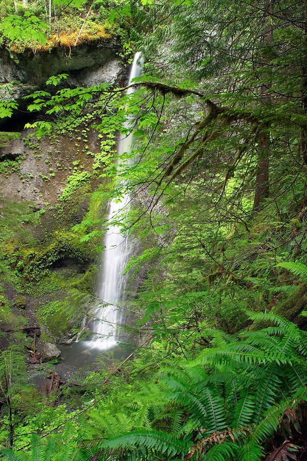 Marymere Falls, Olympic National Park, Olympic Peninsula, Clallam County, Washington, USA