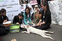 BOGOTA -COLOMBIA. 5-OCTUBRE-2014. Cientos de personas marcharon y mostraron su afecto por los animales en la capital de la republica y pidieron  por el buen trato a los animales y rechazaron  las corridas de toros y el maltrato animal en general./ Hundreds of people marched and showed their affection for animals in the capital of the republic and called for the proper treatment of animals and rejected bullfighting and animal abuse in general. Photo: VizzorImage/ Felipe Caicedo / Staff