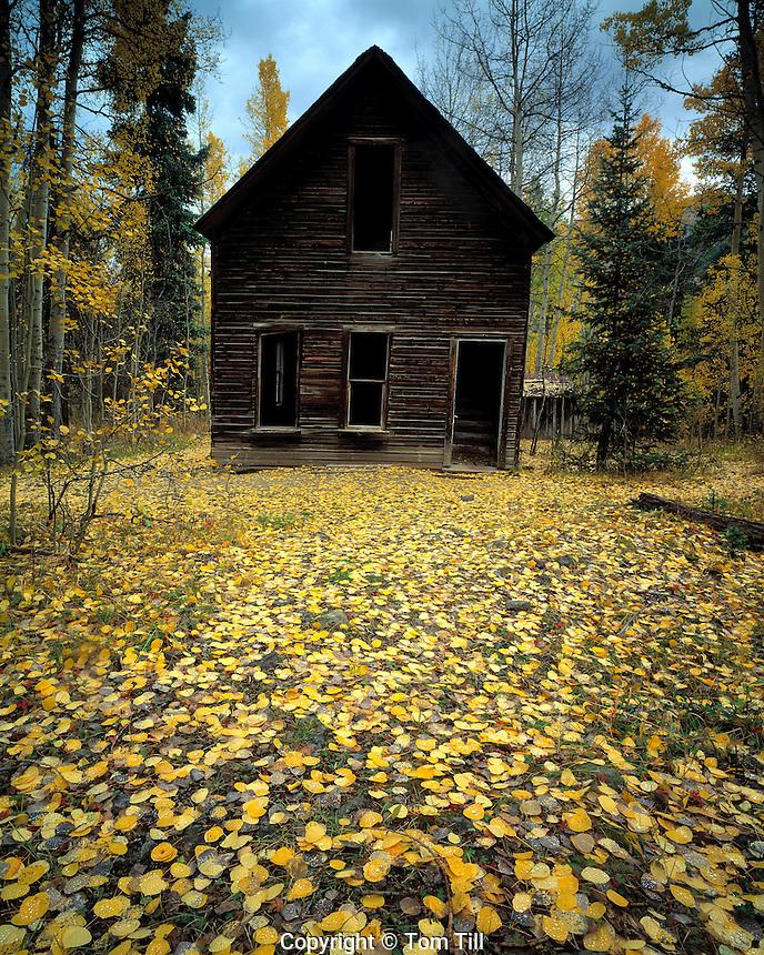 Aspen Leaves in Ironton, Ironton Ghost Town, Colorado   San Juan Mountains    San Juan National Forest