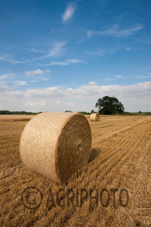 Round bales of Winter Wheat Straw in Lincolnshire.Picture by Tim Scrivener date taken 11th August 2012.mobile 07850 303986 e-mail tim@agriphoto.com.....covering agriculture in The United Kingdom....