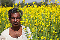Rajasthan, India.   Farmer Standing in front of his Field of Mustard in Bloom.