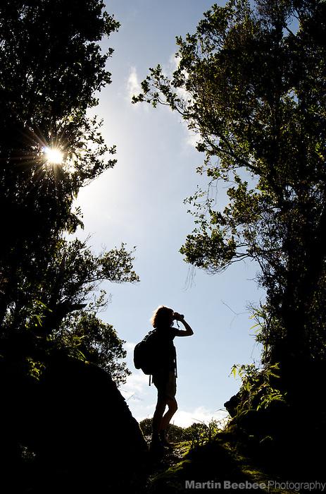 Woman birdwatching on the Kawaikoi Stream Trail, Na Pali-Kona Forest Reserve, Kauai, Hawaii