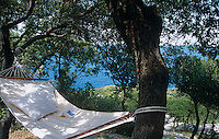 A hammockunder the olive trees with a view of the sea beyond