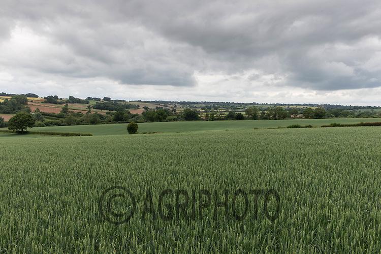 20.6.2020 Rutland landscape <br /> ©Tim Scrivener Photographer 07850 303986<br />      ....Covering Agriculture In The UK.