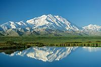 Denali, North America's Highest Mountain, Reflection In Tundra Pond, Summer, Denali National Park, Alaska
