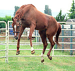 Little Current, 1974 champion three-year-old, dual classic winner, at age 30 in Monroe, Washington