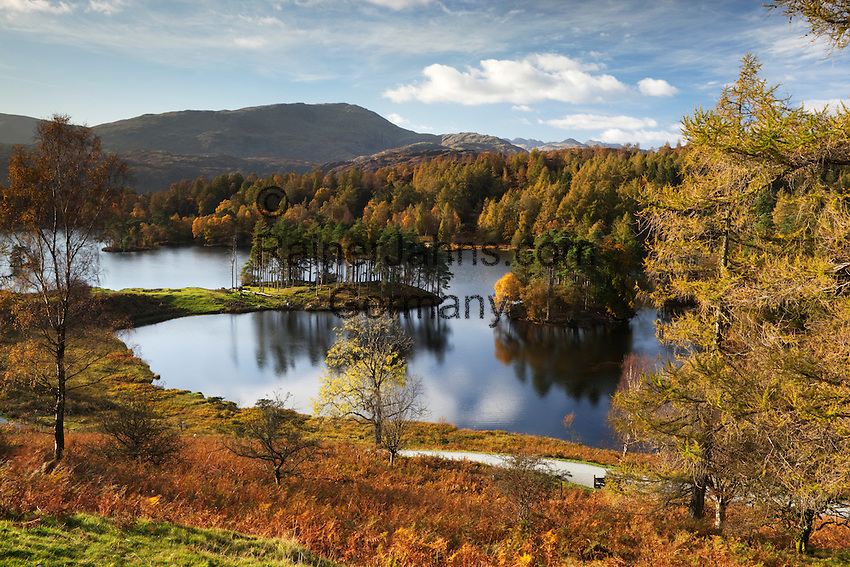 Great Britain, Cumbria, near Ambleside: Lake District National Park, Tarn Hows with the Furness Fells behind in Autumn