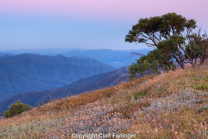 The Australian Alps at daybreak from Alpine National Park, VIictoria, Australia (from Razor Back Ridge)