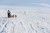 Matt Hall runs on the trail lined wiht tripod trail markers heading toward the finish at Nome 4 miles away on Wednesday March 14th during the 2018 Iditarod Sled Dog Race.  <br /> <br /> Photo by Jeff Schultz/SchultzPhoto.com  (C) 2018  ALL RIGHTS RESERVED