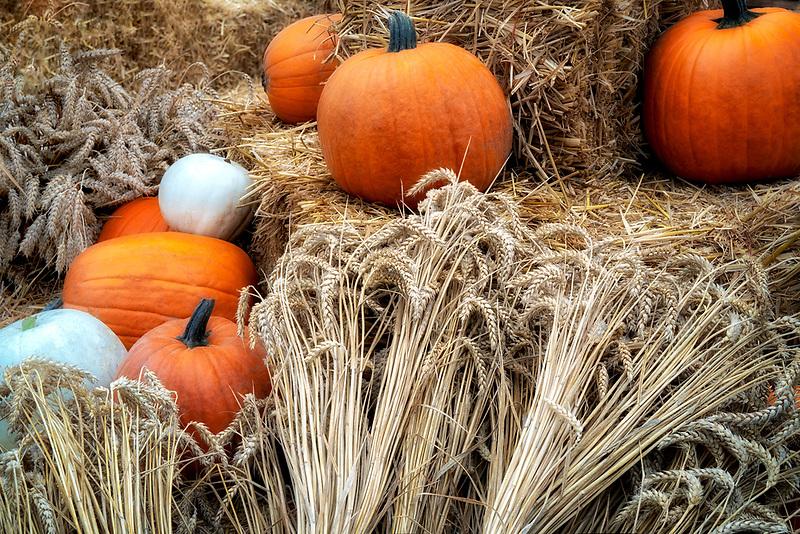 Pumpkins and wheat display.