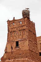 Morocco.  Stork on Nest, Tamdaght Ksar, an Historic Glaoui Settlement.