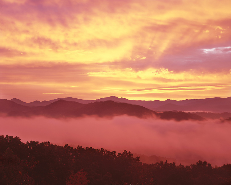 Foggy sunrise color viewed from the Foothills Parkway; Great Smoky Mountains National Park, TN