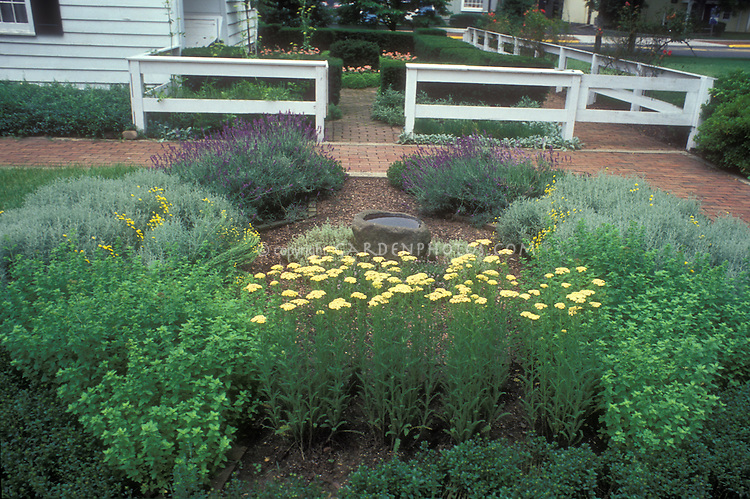 Pretty backyard herb garden with brick patio, lavender, santolina, yarrow, germander border