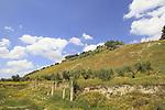 Samaria, Sebastia, a view of Shomron hill