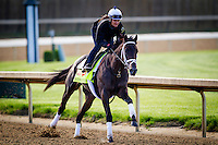 May 01, 2014: Intense Holdiay prepares for the Kentucky Derby at Churchill Downs in Louisville Ky. Alex Evers/ESW/CSM